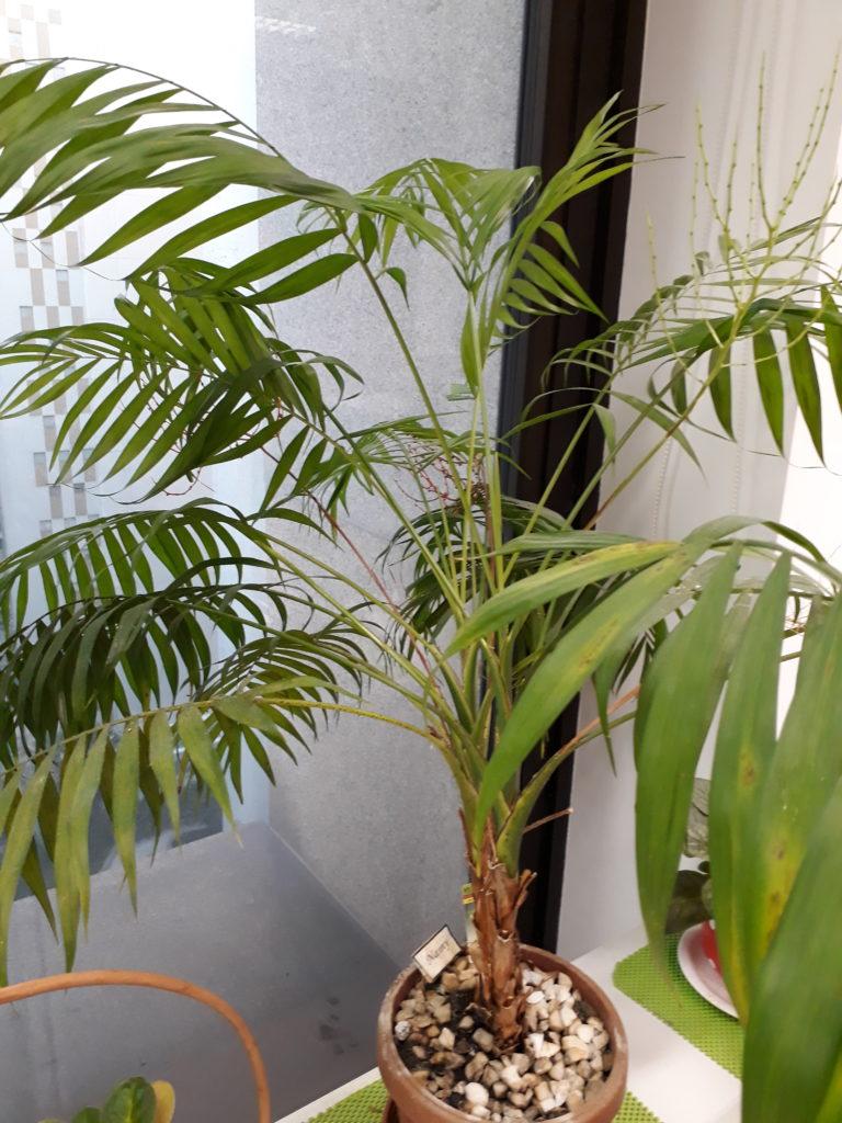 palmeira, escritório